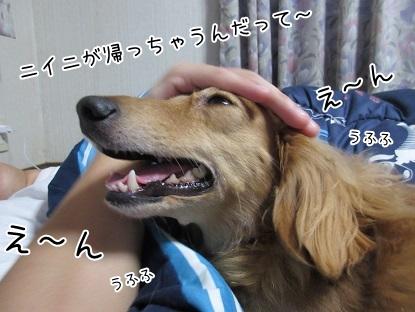 kinako5913.jpg