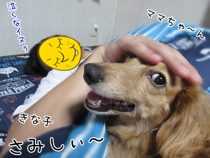 kinako5914.jpg
