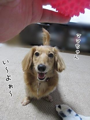 kinako5936.jpg
