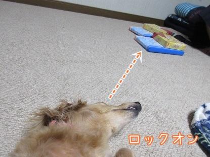 kinako5940.jpg