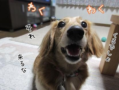 kinako5950.jpg