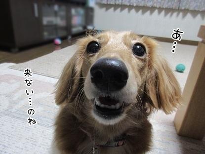 kinako5951.jpg