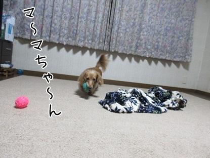 kinako5972.jpg