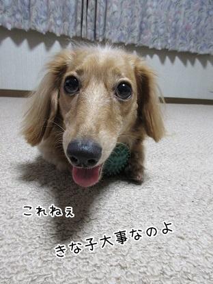 kinako5973.jpg