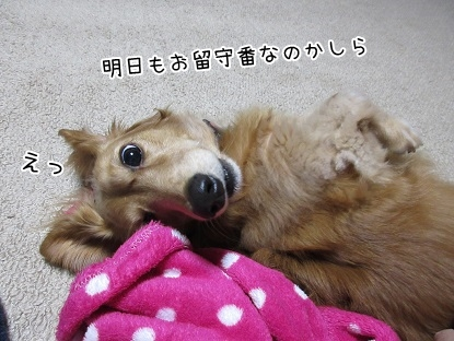 kinako5984.jpg