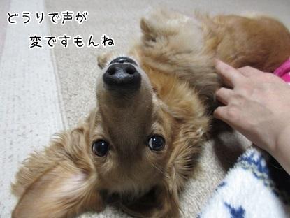 kinako5986.jpg