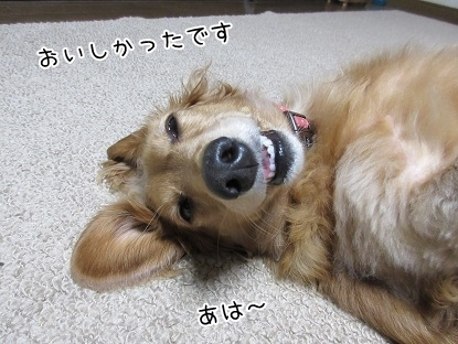 kinako5992.jpg