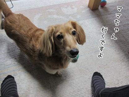 kinako5995.jpg