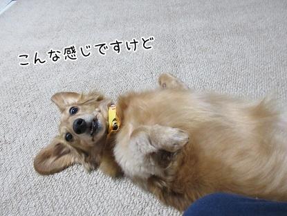 kinako5997.jpg