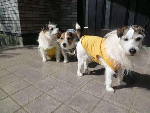 熊本地震の影響(5)