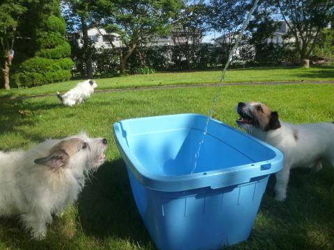 水遊び始めました(2)