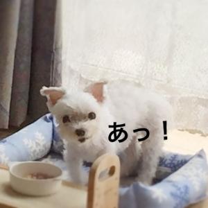 160810_3.jpg