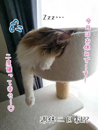 DSC_0345_1.jpg