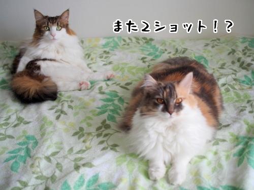 P7120113_1.jpg