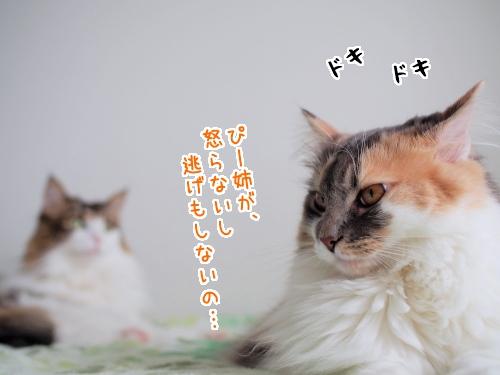 P7120116_1.jpg