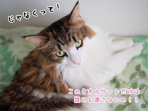 P7120137_1.jpg