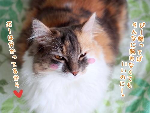 P7120139_1.jpg