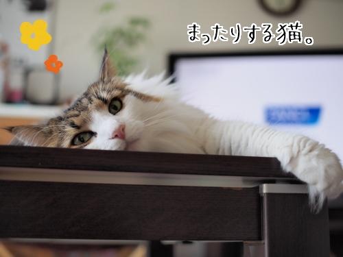 P7290051_.jpg