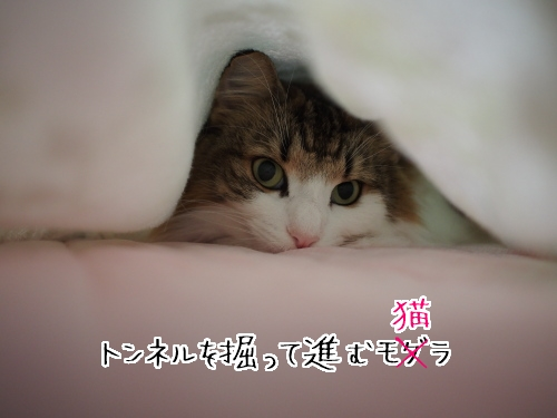 P9230081_.jpg