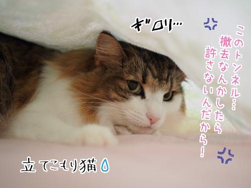 P9230083_.jpg