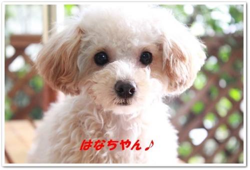 hanachan1.jpg