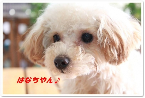 hanachan.jpg