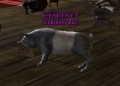 Striped Pelennor Pig