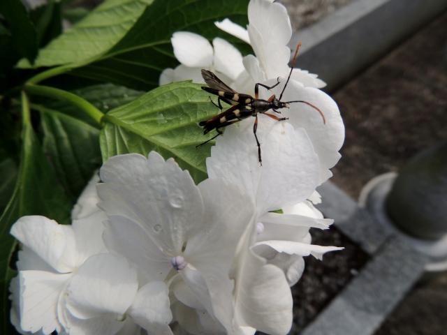 N8067花に虫