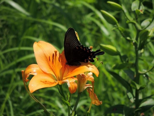 N8255花と蝶