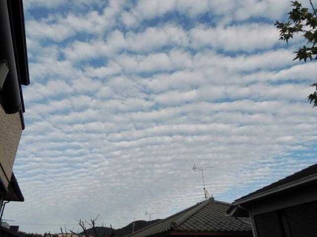 N8362秋の空