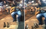cats-and-street-performer.jpg