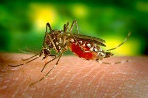 03c 300 Zika mosquito in Africa