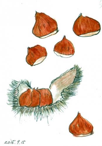 03b 500 20160915 chestnuts