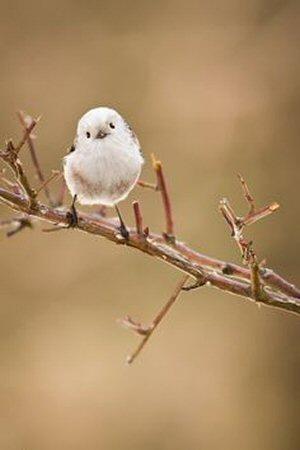 01a little bird
