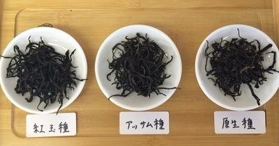 2016年台湾新茶