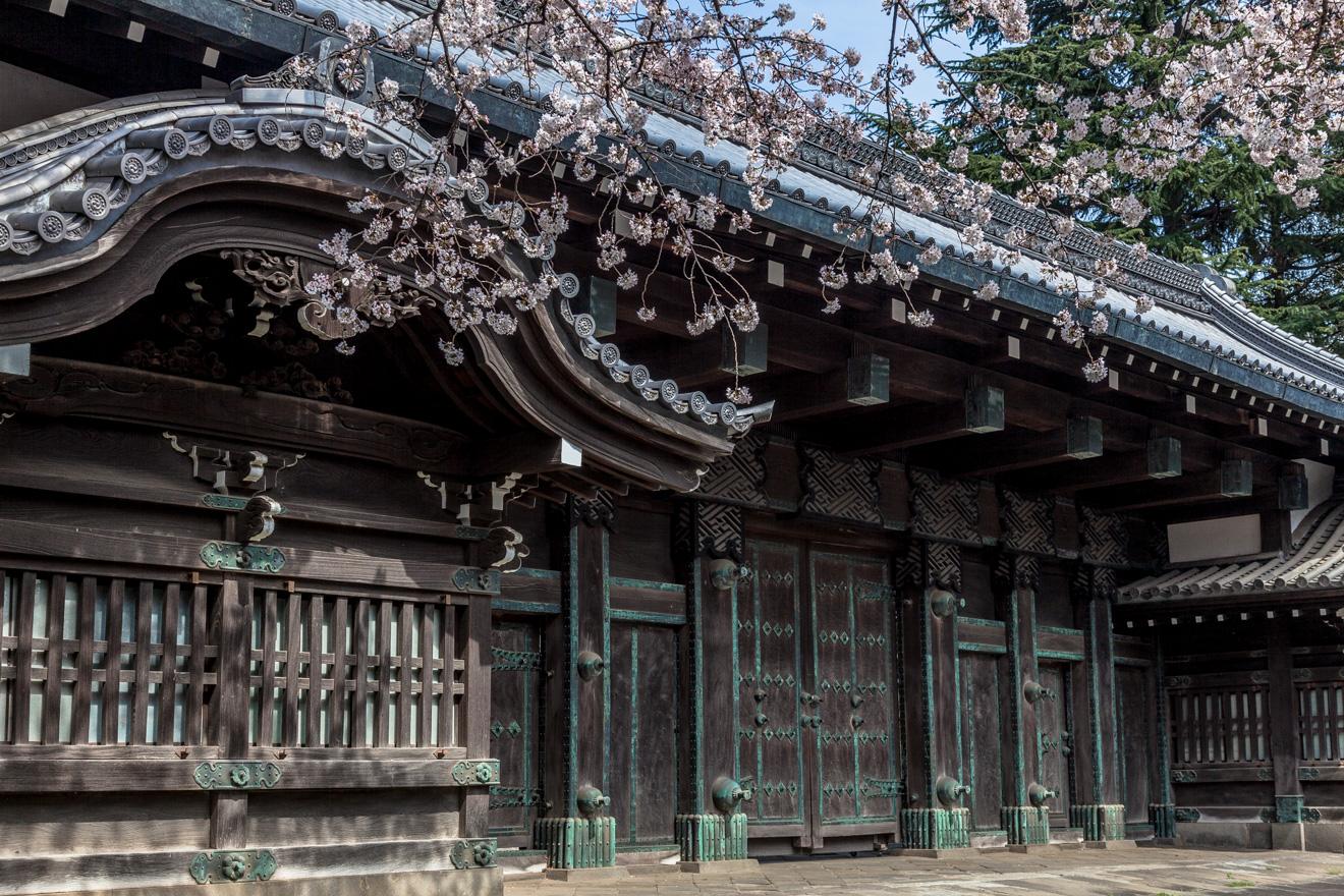 160331上野公園-5929-2