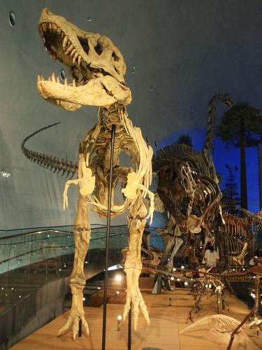 恐竜160802-1