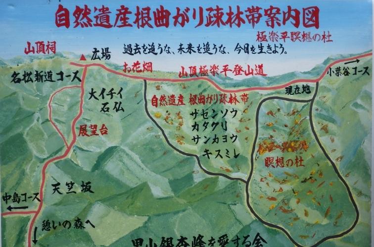 1042自然遺産根曲疎林帶案内図