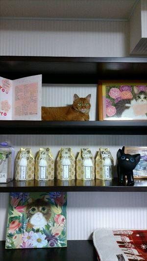 20160715猫棚探検03_R