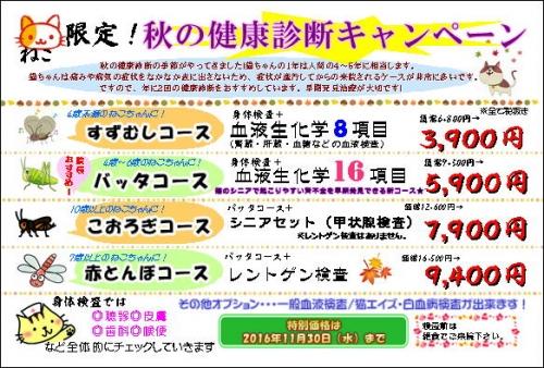 2016秋健猫ポスター