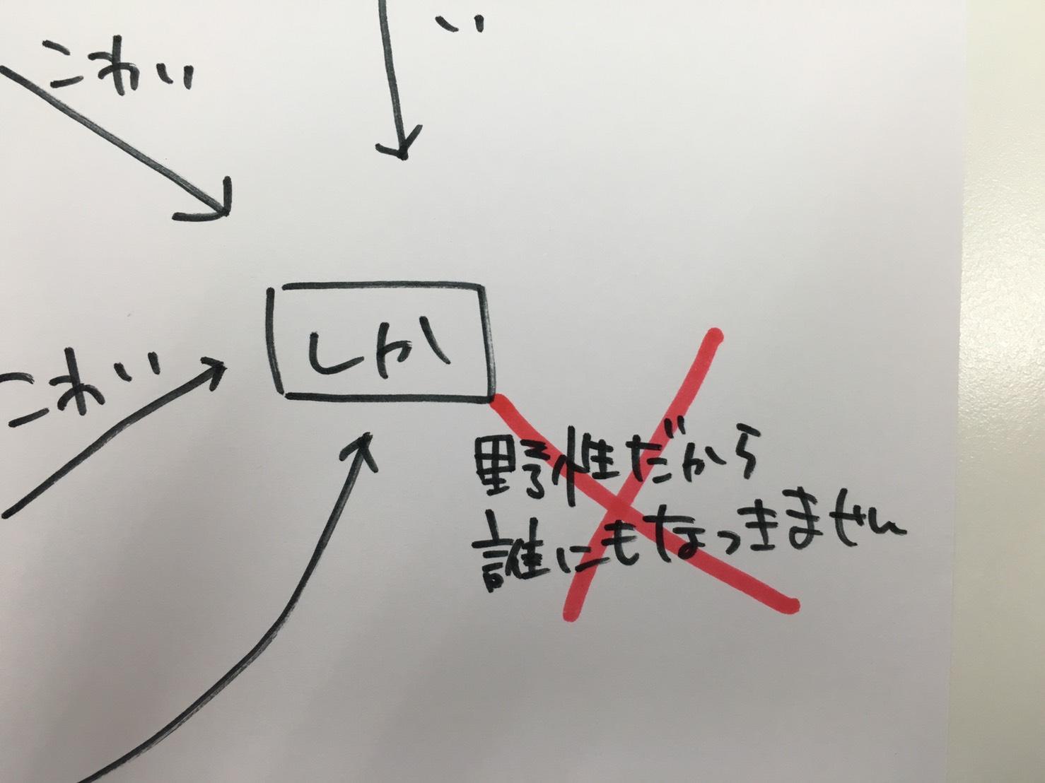 S__6864908.jpg
