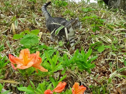 レンゲツツジが咲いて3