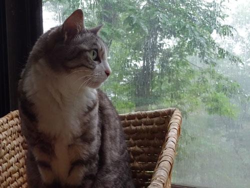 急に豪雨!3