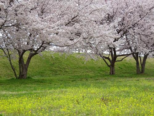 春爛漫のウォーキング1
