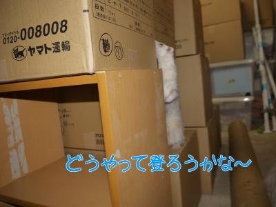 b3A3LCvDCiOfdFU1476505937_1476505999.jpg