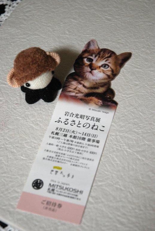 cats1-1.jpg