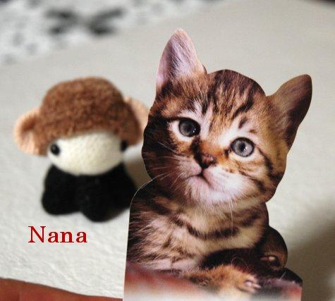 cats1-2.jpg