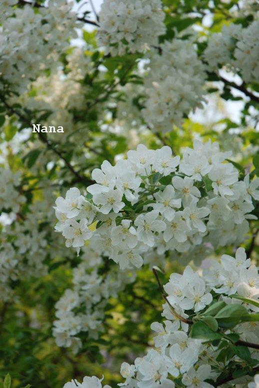 flower1-11_2016052022463041c.jpg