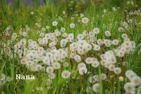 flower1-13_2016052022463361a.jpg