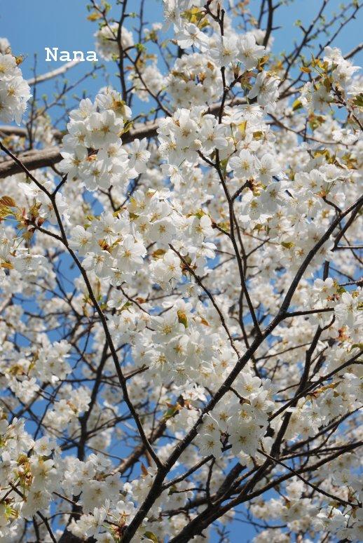 flower1-4_20160509203632629.jpg